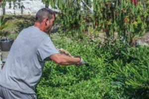 desbroce-limpieza-del-terreno