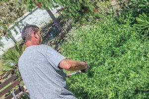 mantenimiento-de-jardines-en-malaga