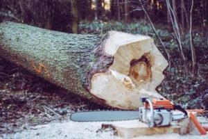 cómo talar árbol inclinado