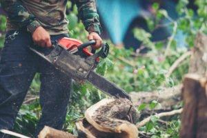 cómo talar un árbol inclinado