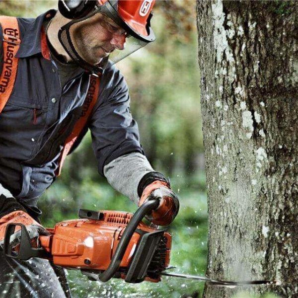 consejos sobre cómo talar un árbol inclinado