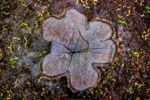 talar árbol inclinado