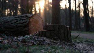 talar un árbol inclinado